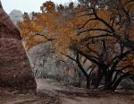 Canyon de Chelly track