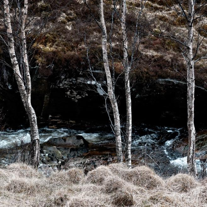 Glen Nevis trees